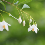 ポトリア広場の花